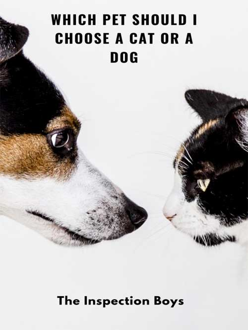 Which pet should I choose a cat or a dog?