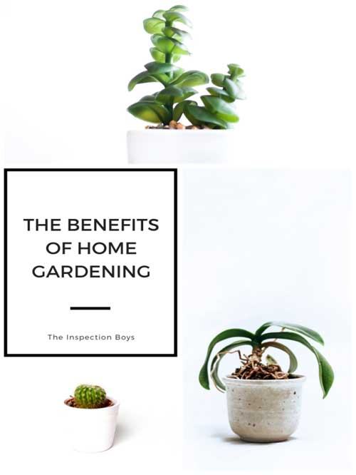 The benefits of home gardening