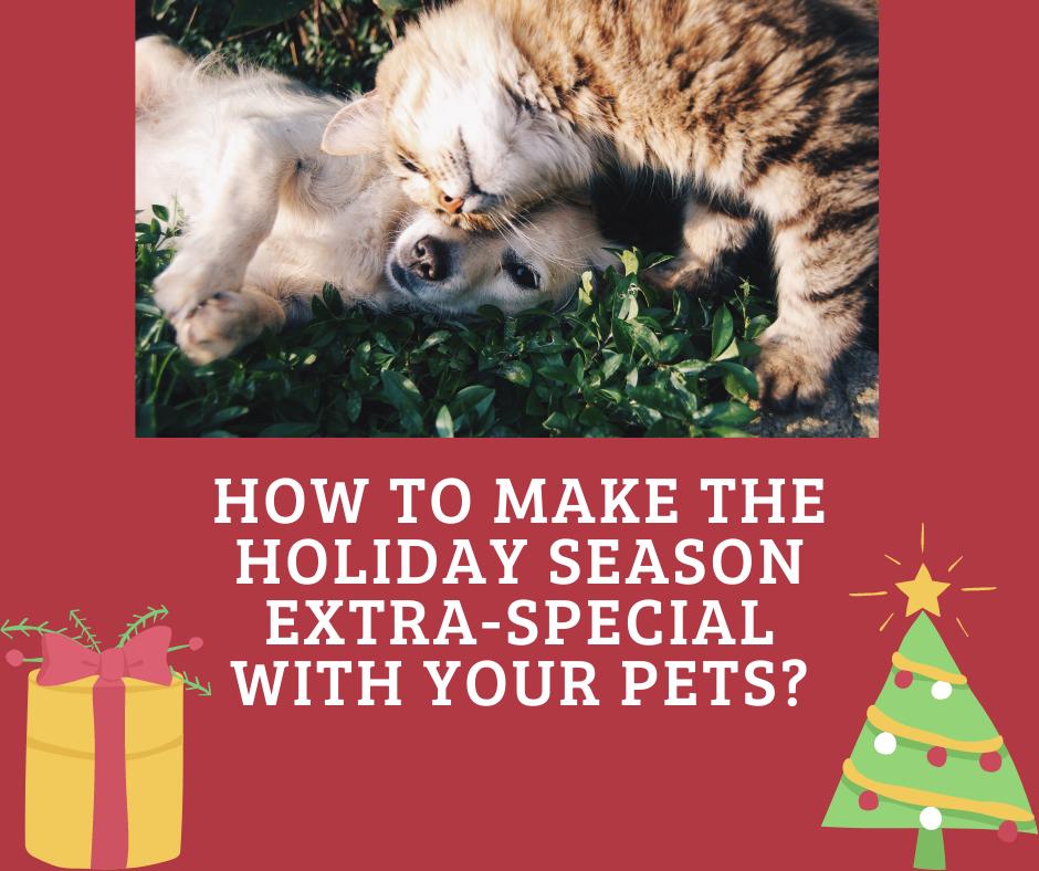 Pet Christmas blog