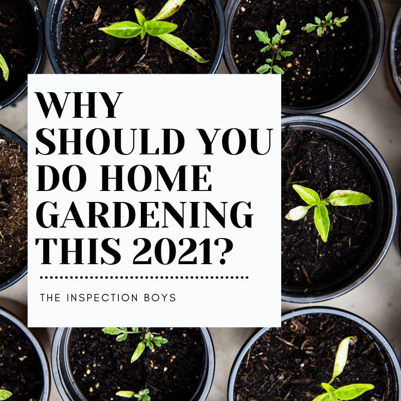 Why you should do home gardening this 2021?